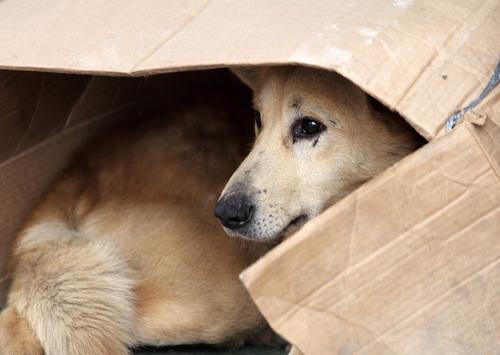अवांछित कुत्तों के भी हक हैं