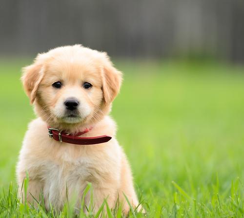 पपी चुनते वक्त ध्यान रखने लायक 9 टिप्स