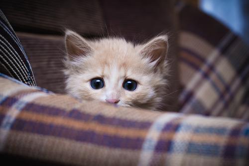 बिल्ली के बच्चे के लिए तैयारी की 11 टिप्स
