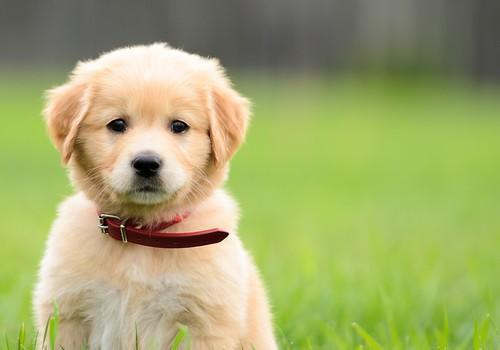 کتے کا انتخاب کرتے وقت 9 قابل عمل تجاویز کو ذہن میں رکھیں