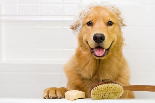 पपी को नहलाने के 9 सरल उपाय